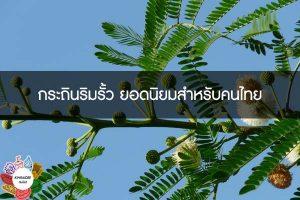 กระถินริมรั้ว ยอดนิยมสำหรับคนไทย #กินอะไรดี